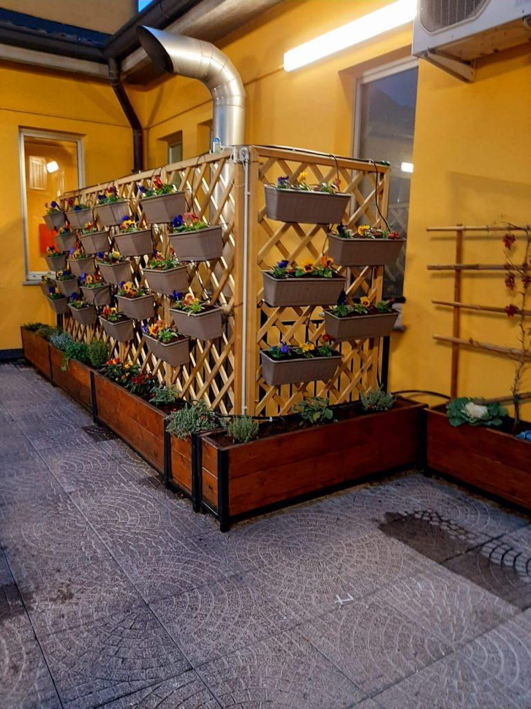 vista del graticcio con vasi di viole nel terrazzo interno della biblioteca, foto